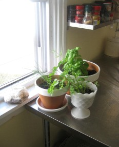 Indoor Herb Garden - Window Sill Pots